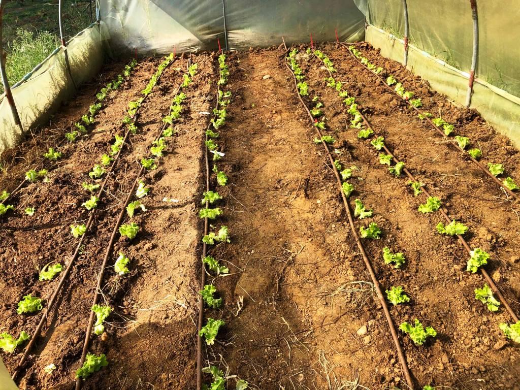 Καλλιεργούμε την τροφή μας!!